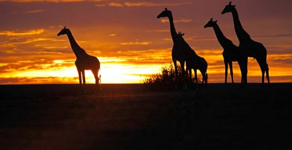 Africa Safaris