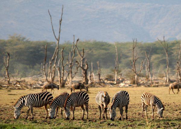 Lake Manyara Wildlife