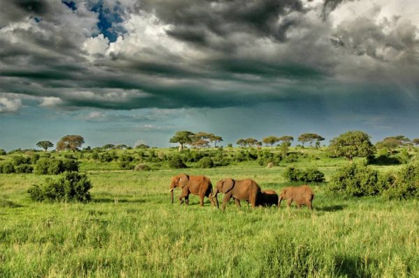 Tarangire elephants scenery region
