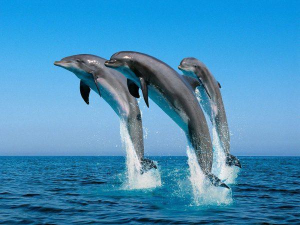 blogwasinidolphins